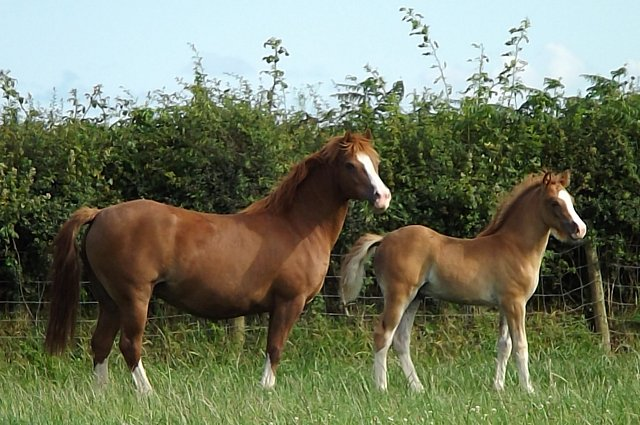 Gower Foal & Yearling Show - Sunday 7th October 2018